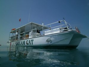dreamcat2 300x225 - Sunset Cruise