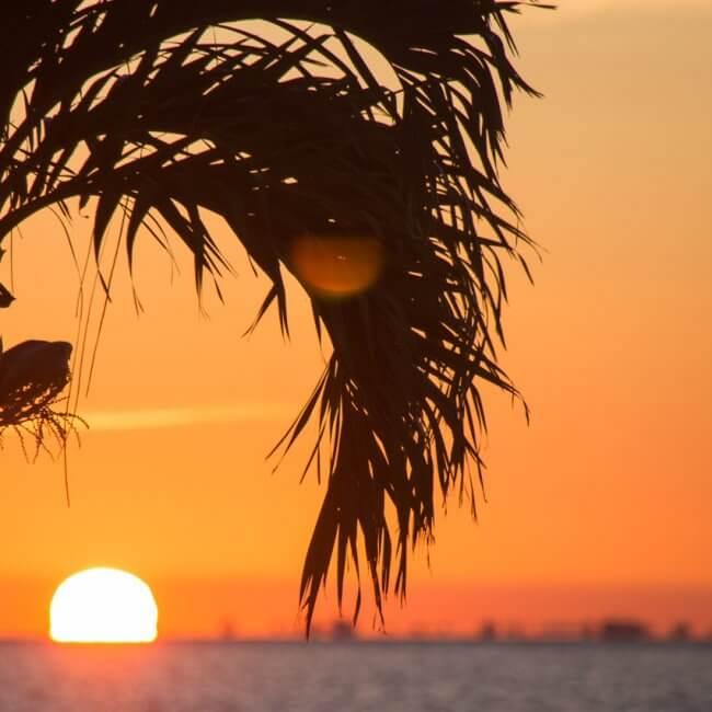 sunset cruise keywest hayden dunsel 650x650 - Lost Reef Adventures Home