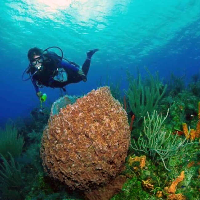 wreck reef dive key west2 - Lost Reef Adventures Home