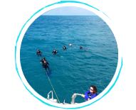 open water dive course key west - Lost Reef Adventures Home