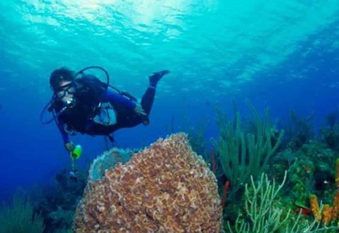 checkout dive course key west fl - Scuba Diving Certifications