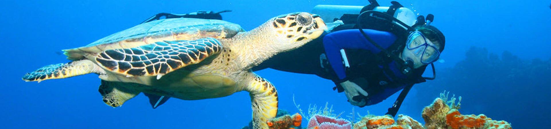 Key West Dive FAQs