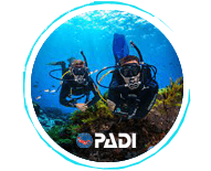 padi checkout dives - Lost Reef Adventures Home