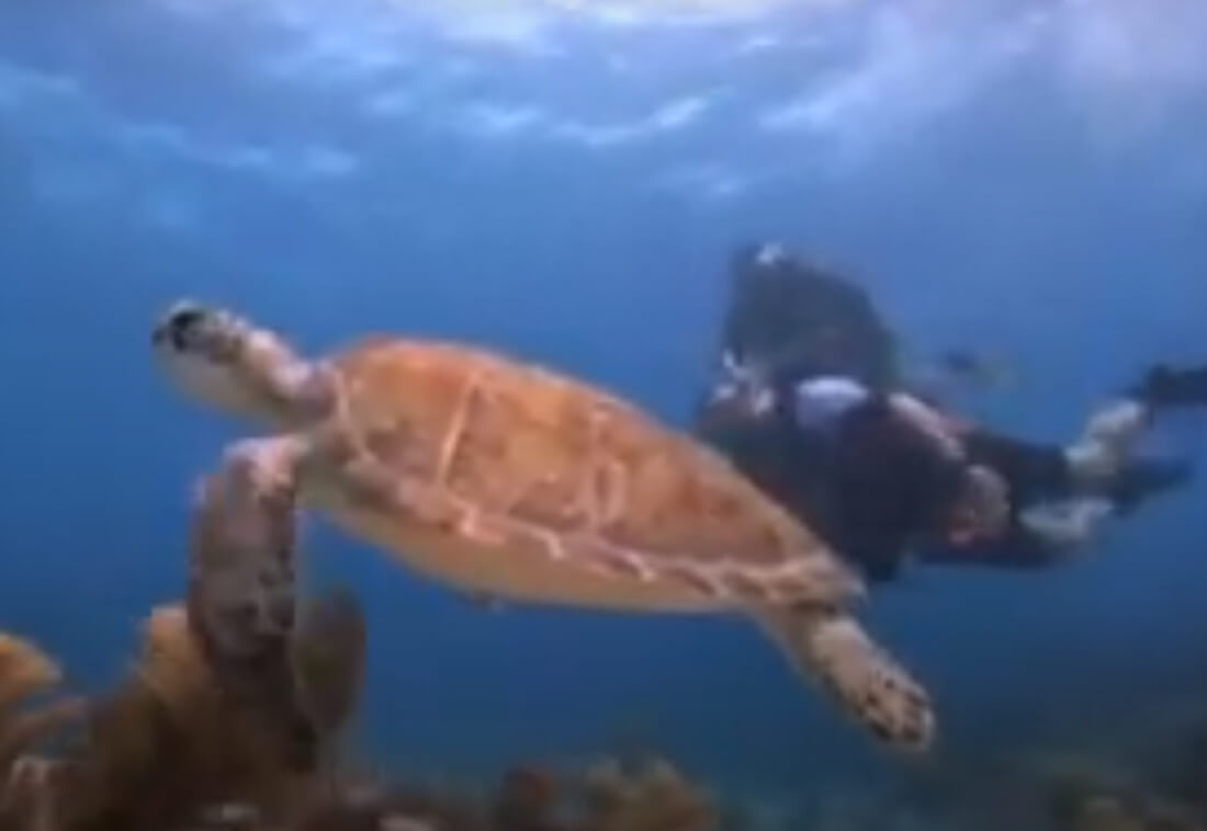 turtle diving keywest - Book Now